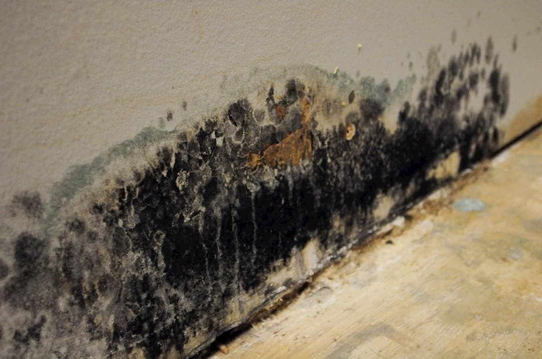 How To Get Rid Of Mold From Your Bathroom 1